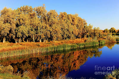 Photograph - Golden Reflections by Jon Burch Photography