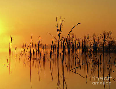 Photograph - Golden Reflections by Roger Becker