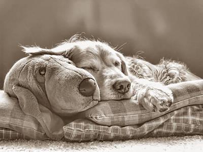 Golden Retriever Photograph - Golden Retriever Dog Sleeping With My Friend Sepia by Jennie Marie Schell