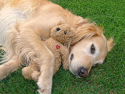 Photograph - Golden Retriever Dog Teddy Bear Love by Jennie Marie Schell