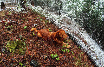 Fish-eye Look Photograph - Golden Retriever In A Wet Snowy Spring Snowstorm by Jerry Voss