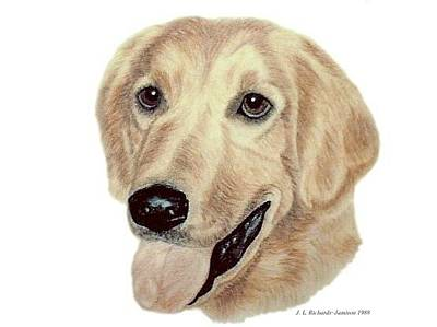 Drawing - Golden Retriever by Jennie  Richards