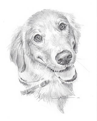 Drawing - Golden Retriever by Mike Theuer