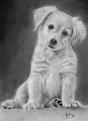 Labrador Drawing - Golden Retriever Puppy Drawing by John Harding