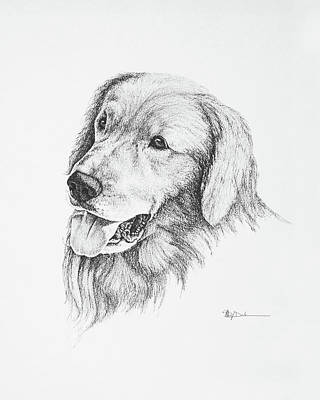 Drawing - Golden Retriever Show Breed by Mary Dove