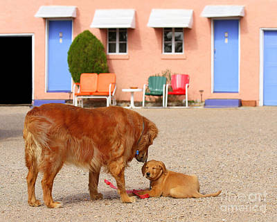 Photograph - Golden Retrievers At The Blue Swallow Motel by Catherine Sherman