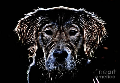 Photograph - Golden Retriver 13218 by Ray Shrewsberry