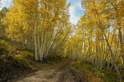Photograph - Golden Road by Aaron Spong