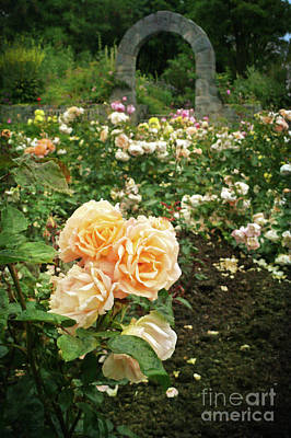 Photograph - Golden Roses In The Garden by Maria Janicki