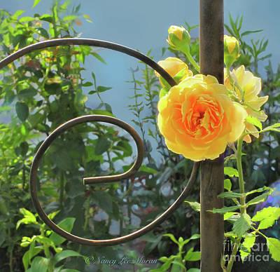 Photograph - Golden Ruffled Rose On Iron Trellis by Nancy Lee Moran