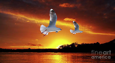 Cloudscapes Photograph - Golden Seagull Ocean Sunset. Original Exclusive Photo Art. by Geoff Childs