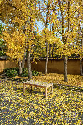 Golden Seat Print by Jamie Pham