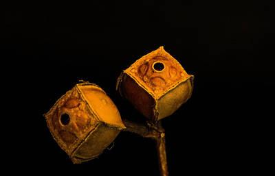 Photograph - Golden Seed Capsules Pair by Douglas Barnett