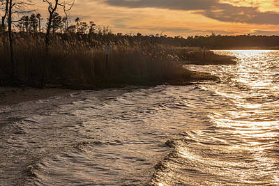 Photograph - Golden Shore Cattus Island Nj by Terry DeLuco