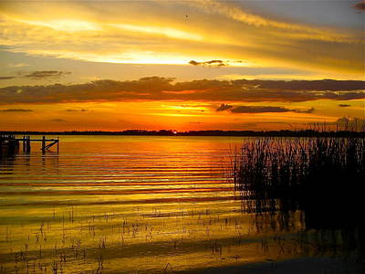 Photograph - Golden Sky by Denise Mazzocco