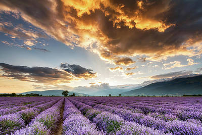 Golden Sky, Violet Earth Art Print by Evgeni Dinev