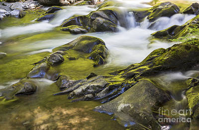 Impressionist Landscapes - Golden Sol Duc River by Colin D Young