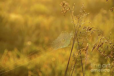 Photograph - Golden Spider Web by Cheryl Baxter