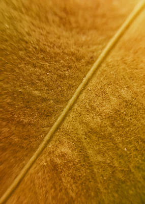 Photograph - Golden Spine by Nathan Little