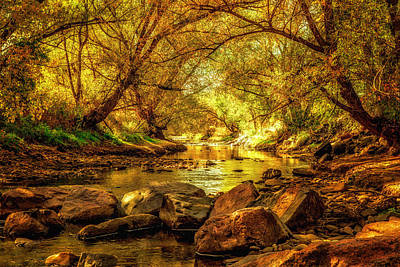 Photograph - Golden Stream by Kristal Kraft