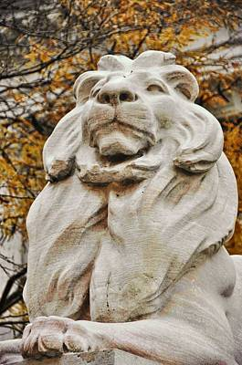 Golden Lion Strength Art Print by JAMART Photography