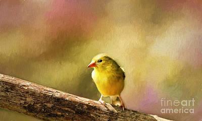 Golden Summer II Art Print by Darren Fisher