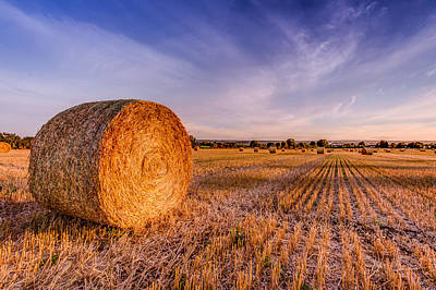 Photograph - Golden Summer by Kelvin Trundle