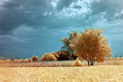 Photograph - Golden Summerscape by Helga Novelli