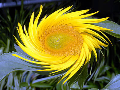 Photograph - Golden Sun Beauty Twirling by Belinda Lee