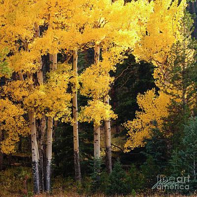 Photograph - Golden Sun by Jim Fillpot