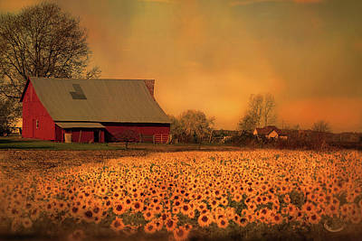 Photograph - Golden Sunflower Harvest by Theresa Campbell