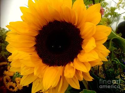 Photograph - Golden Sunflower  by Joan-Violet Stretch