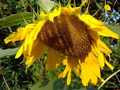 Photograph - Golden Sunflower Petals by Natalie Holland