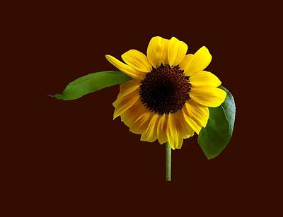Sunflower Photograph - Golden Sunflower by Susan Savad