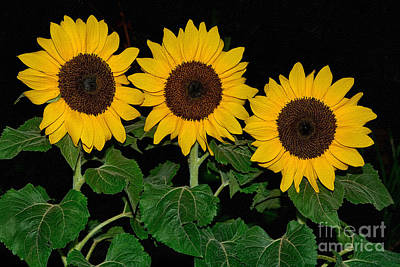 Photograph - Golden Sunflowers On Black By Kaye Menner by Kaye Menner