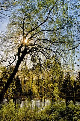 Golden Sunlight Through Green Tree Art Print