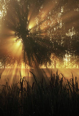 Gold Photograph - Golden Sunrise by Anna Bliokh