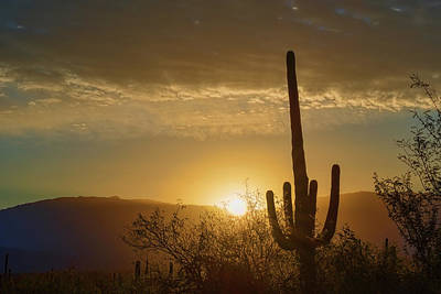 Photograph - Golden Sunrise by Dan McManus