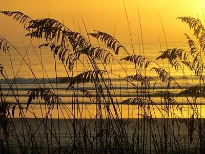Golden Sunrise, Sea Oats, Jax Beach Art Print