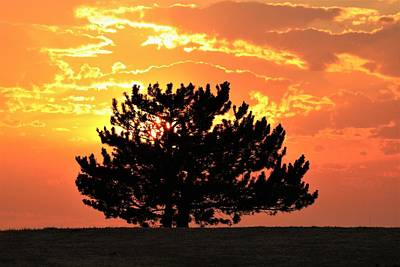 Photograph - Golden Sunset Behind Pine Tree by Sheila Brown