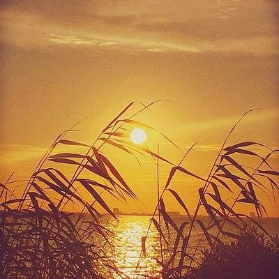 Artwork Wall Art - Photograph - Golden #sunset #enlight #msgulfcoast by Joan McCool