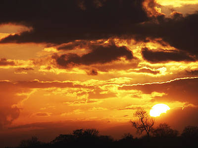 Photograph - Golden Sunset by Gill Billington