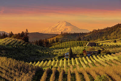 Wall Art - Photograph - Golden Sunset Over Hood River Pear Orchard by David Gn