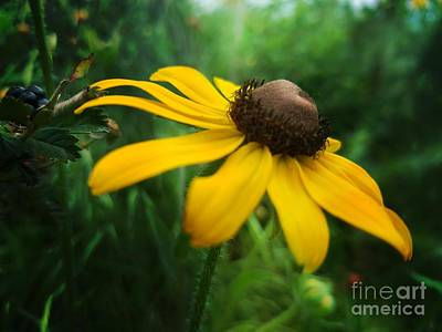 Photograph - Golden Sway by Maria Urso