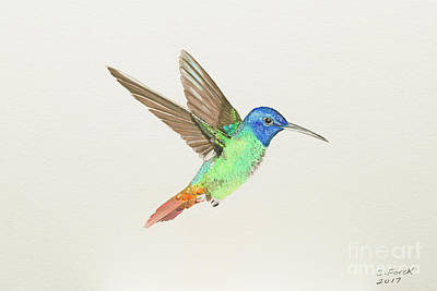 Painting - Golden-tailed Sapphire by Stefanie Forck
