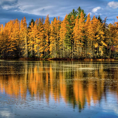 Photograph - Golden Tamarack Reflections by David Patterson