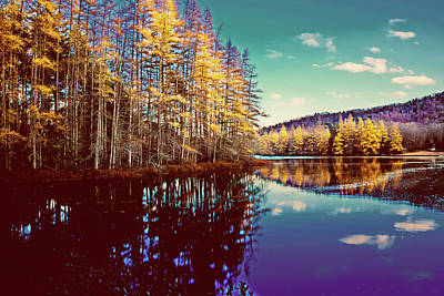 Photograph - Golden Tamaracks by David Patterson