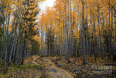 Photograph - Golden Trail by Barbara Schultheis