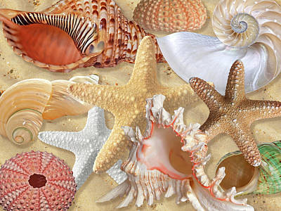 Shells Photograph - Golden Treasure Of The Deep by Gill Billington