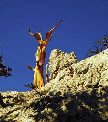 Photograph - Golden Tree by Alan Socolik